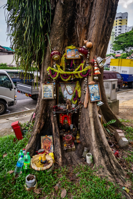 Tree Shrine in Little India