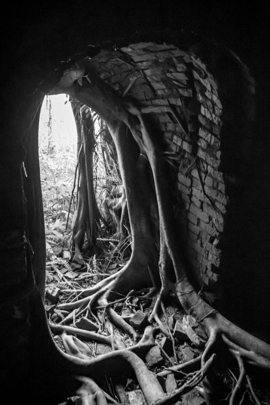 Banyan Treets Inside Shengtai Brick Factory
