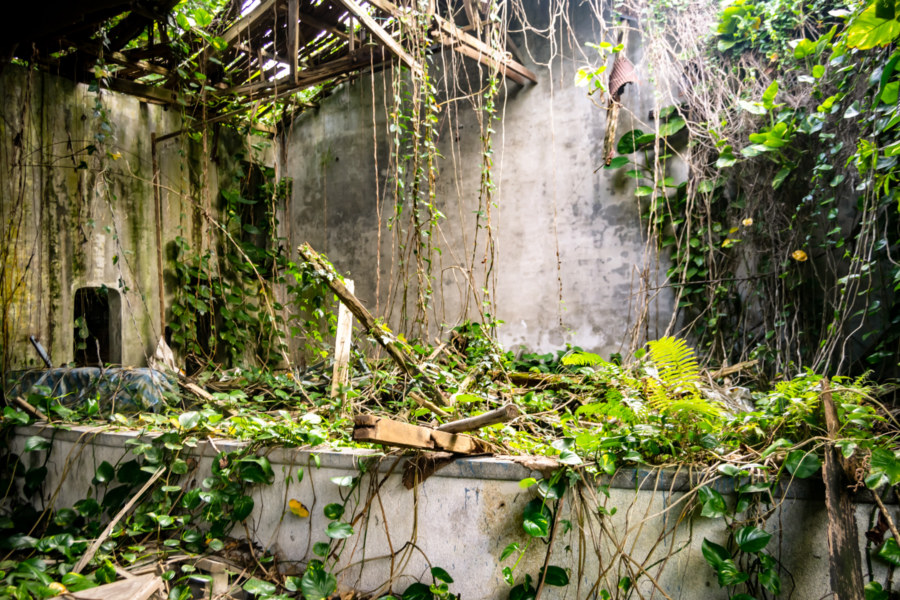 An Overgrown Theater in Hualien County