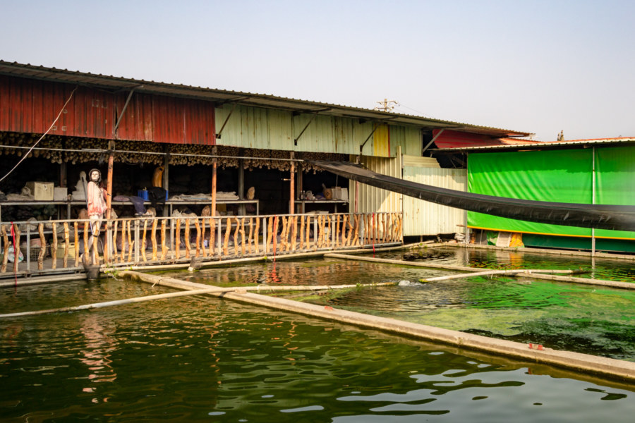 Aquaculture Ponds in the Shell Temple Complex