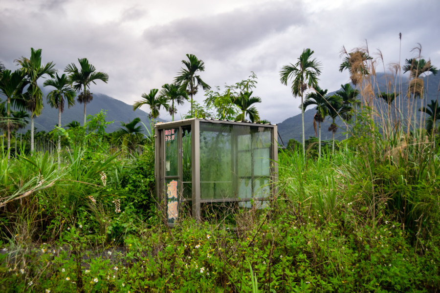 Betel Nut Booth in the Wilderness