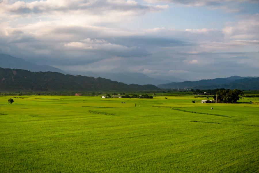 Huadong Valley Rice Paddies to the Horizon