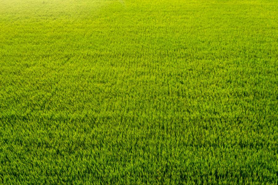 Huadong Valley Rice Paddies