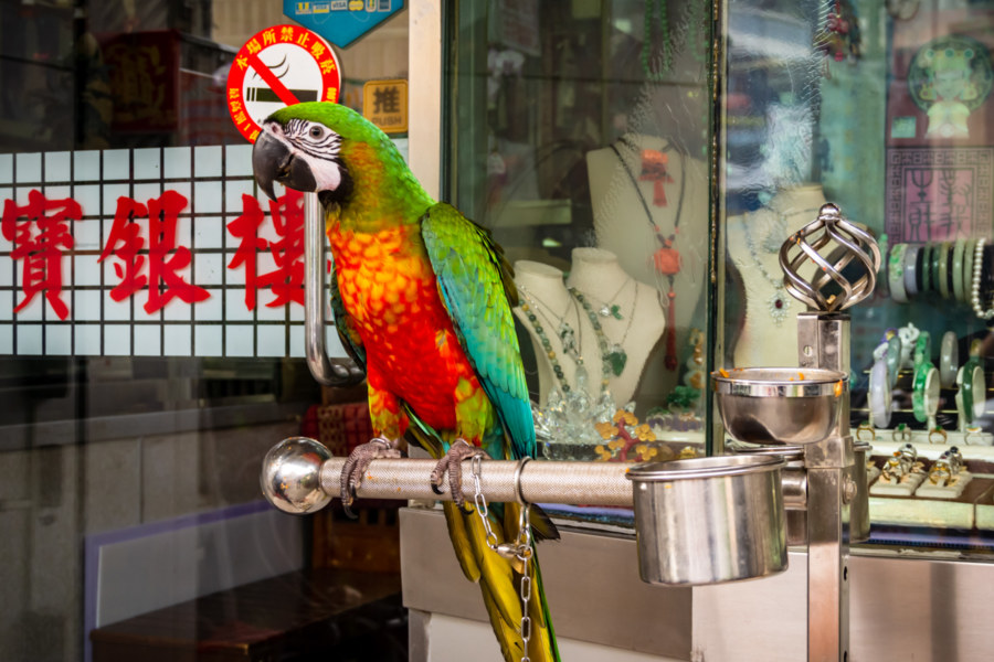 Yuanlin Jewelry Shop Parrot