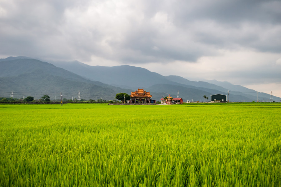 Land God Temple and Rice Paddies in Chishang Township