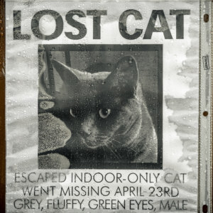 A lost cat poster