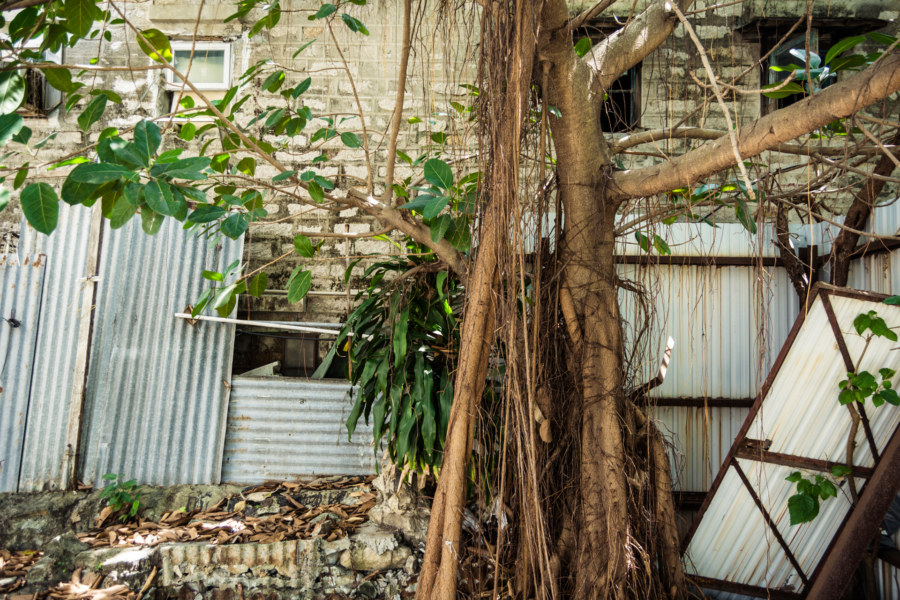 Nature reclaimes Nga Tsin Wai Village 衙前圍村