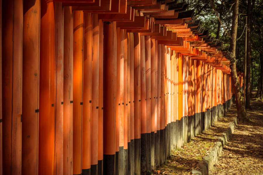 An endless procession of torii at Fushimi Inari Taisha