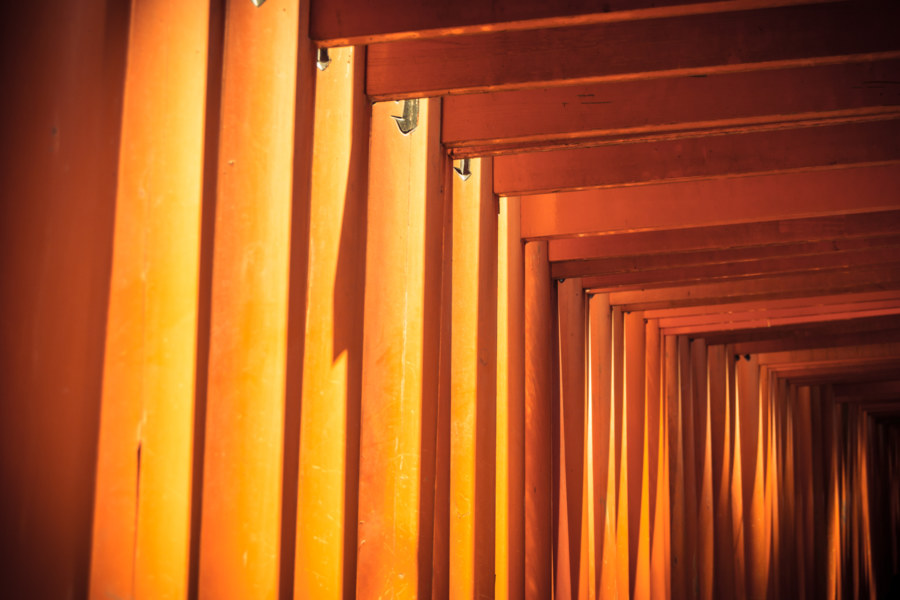Torii study at Fushimi Inari Taisha