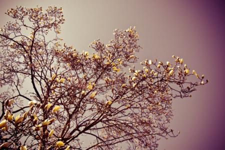 Bongeunsa Flowers