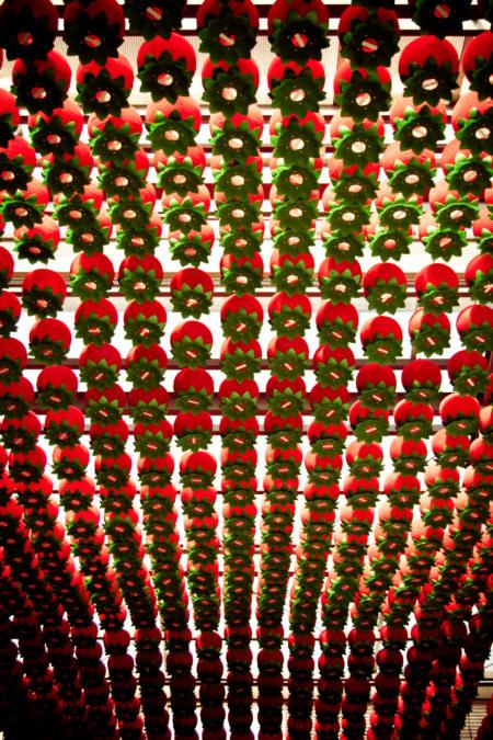 Bonguensa Lanterns
