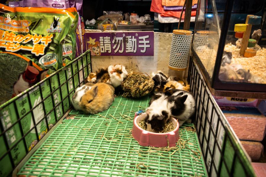 Jingcheng Night Market bunnies