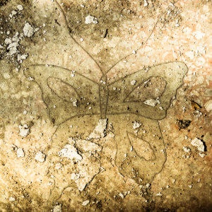 Forlorn butterfly