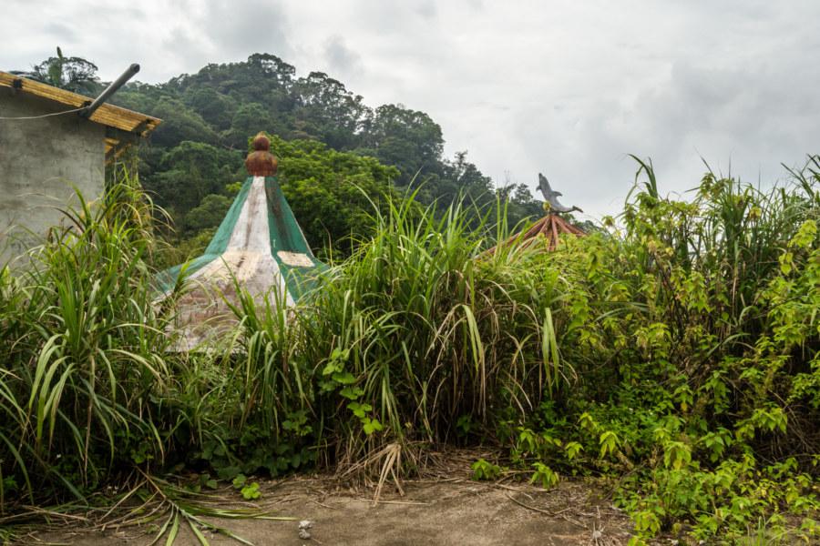 Overgrown at Golden Birds Paradise