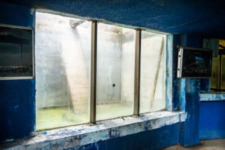 Down in the dark reaches of the abandoned aquarium