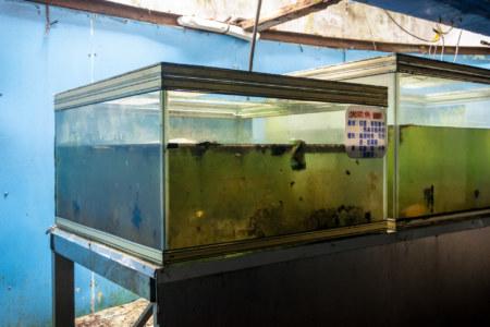 Grimy tanks inside the derelict aquarium