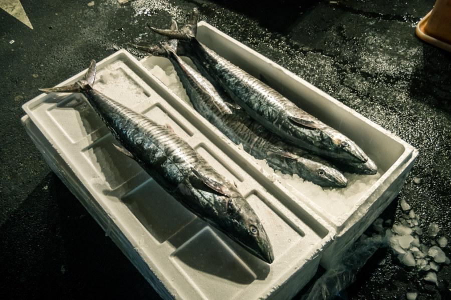 Styrofoam bins full of fish