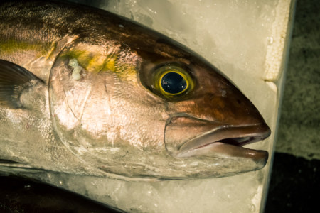 One of many fish at Kanziding