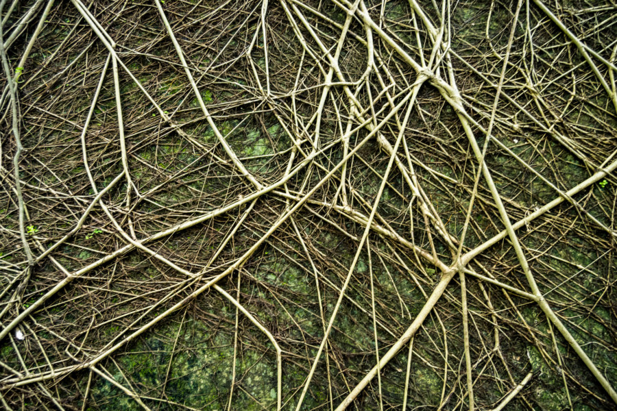 The banyan root network at Qingyu Hall