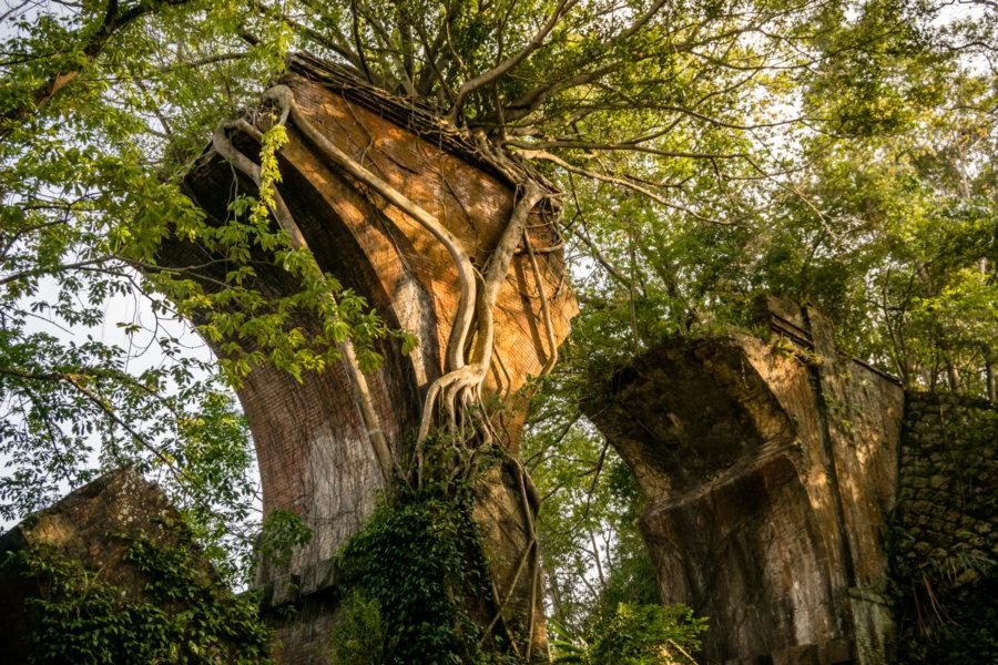 Overgrown Bridge Pylons in Sanyi Township