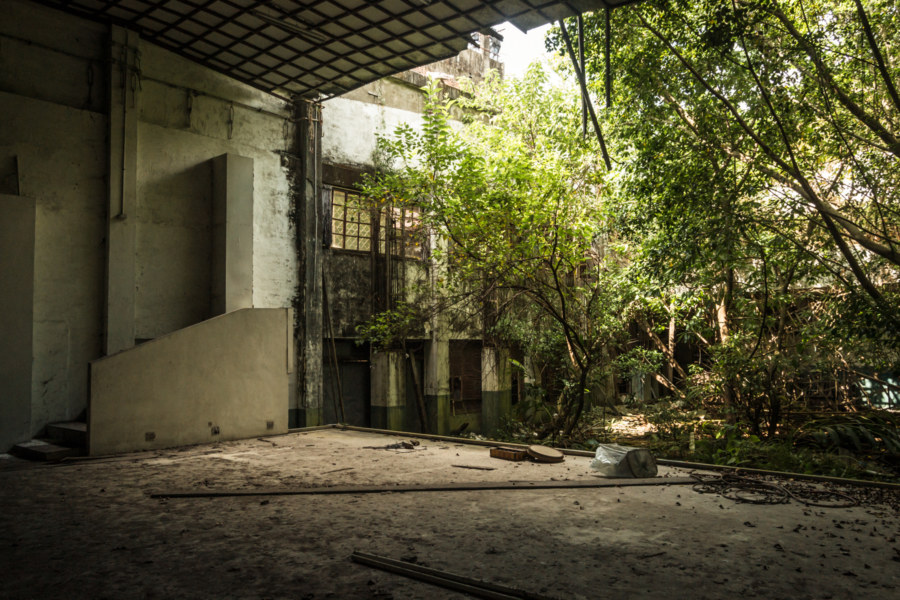 A forest grows out of this old movie theater in Puli