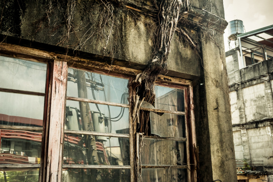 Banyan roots breaking through a window at the Guohua Theater