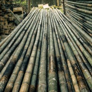 Zhushan Bamboo Harvest 2