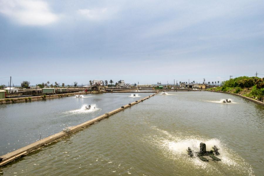 Active aquaculture ponds in Fangliao