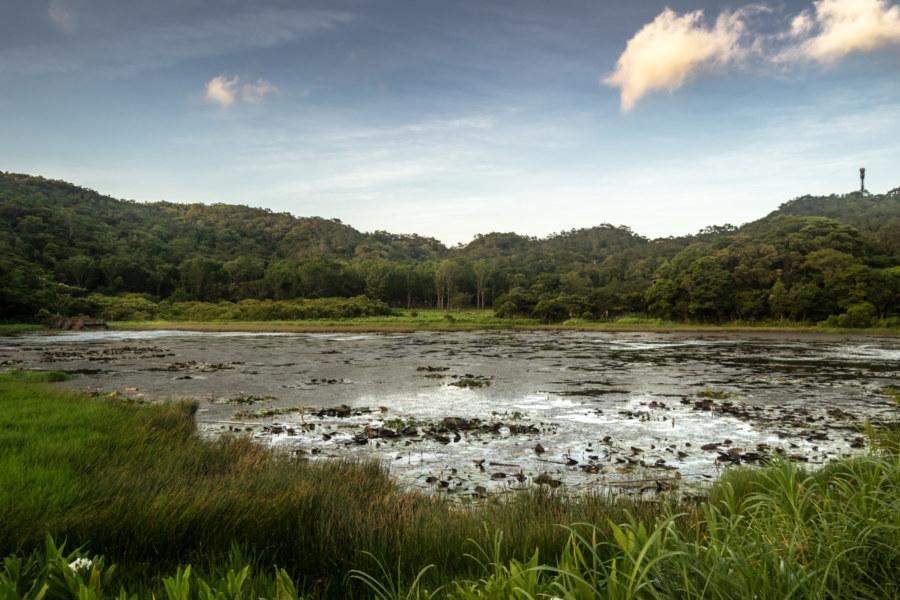 Dongyuan Pond