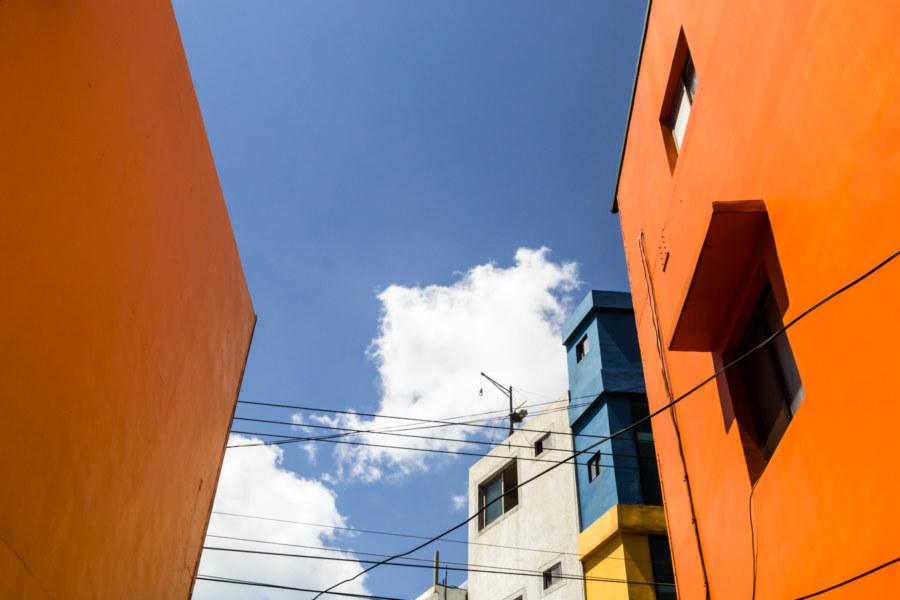 Vibrant shades of Manzhou