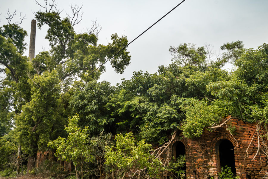 An Overgrown Brick Kiln in Chiayi County