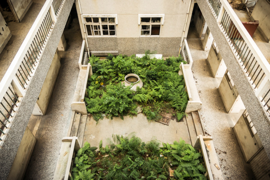 A garden of ferns in the courtyard of the abandoned hospital