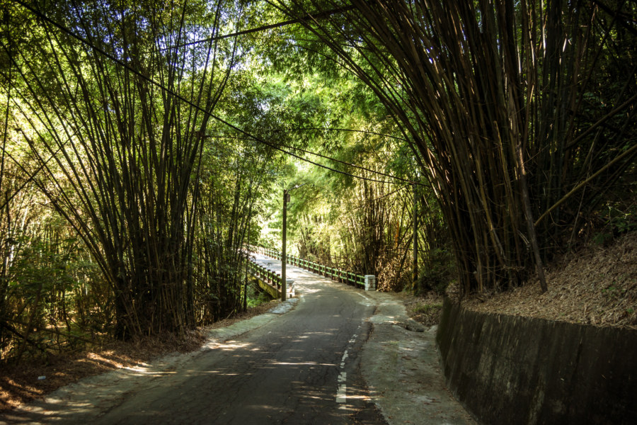 Deep in the bamboo forest