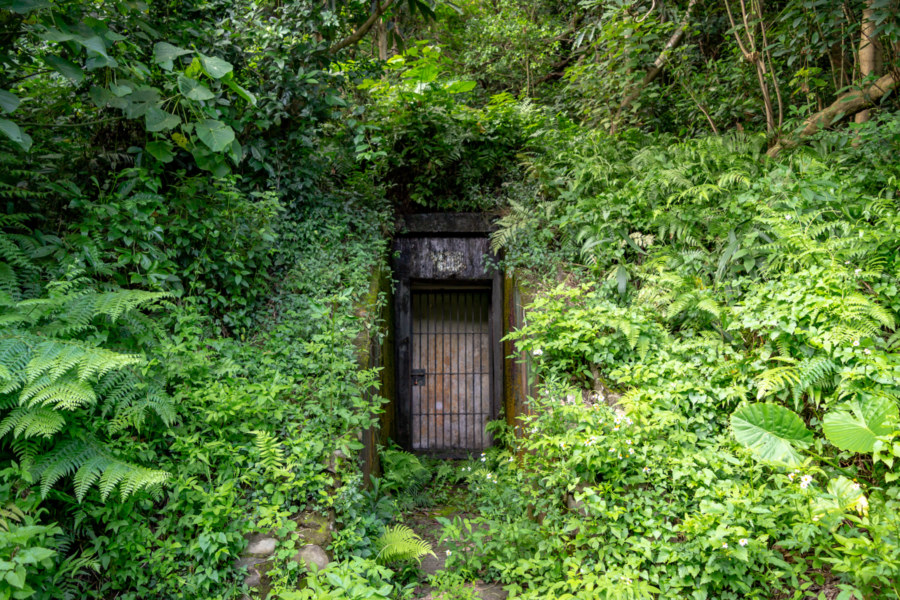 A Door in the Forest