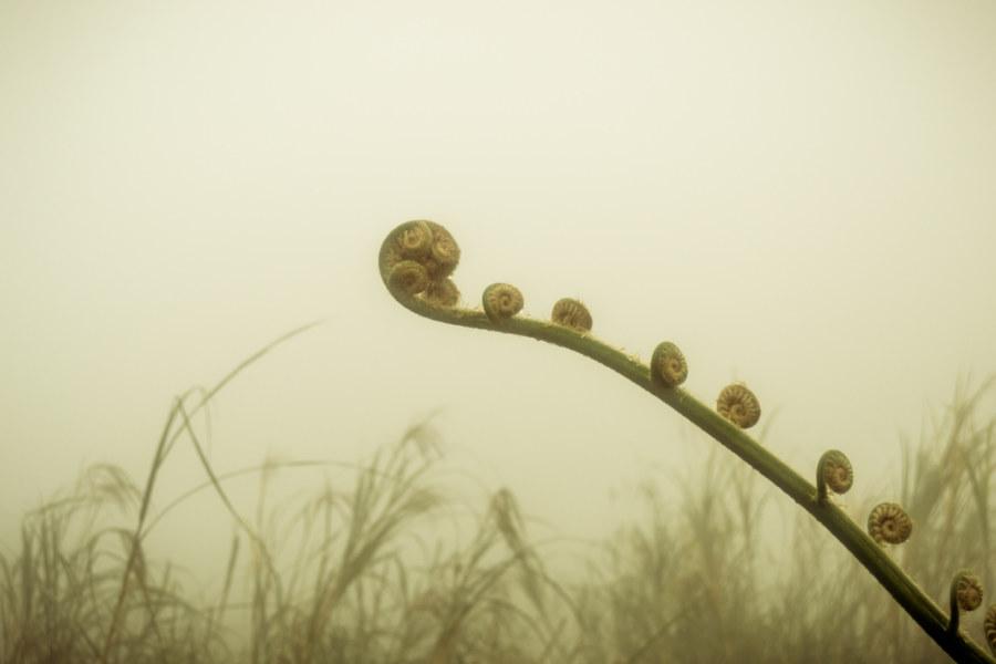 A lifeform unfurls