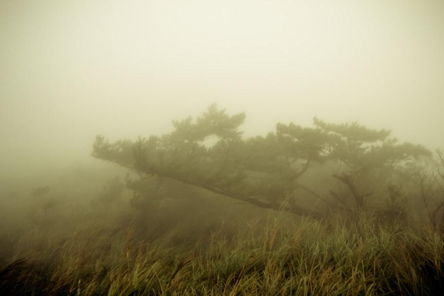 Misty Yangmingshan