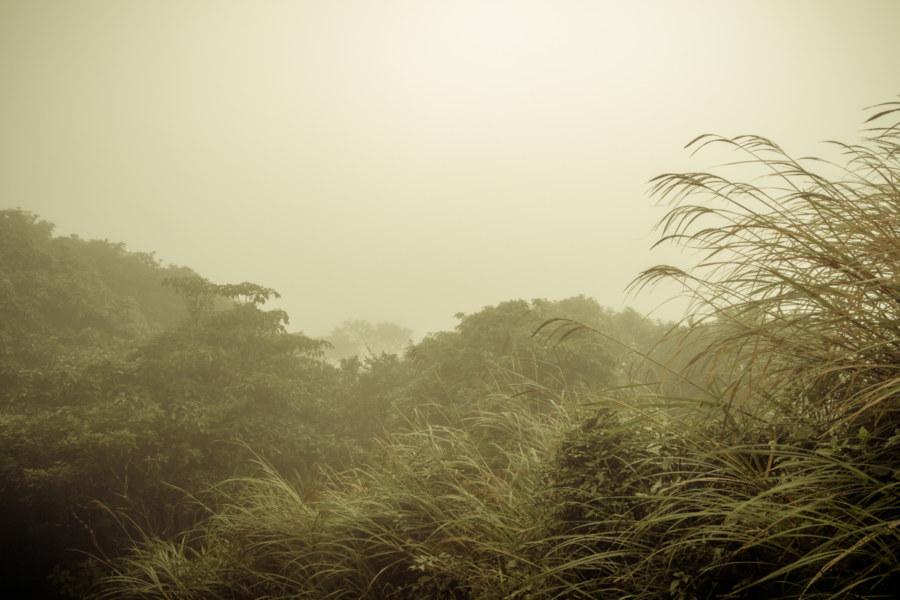 Fog-shrouded Yangmingshan