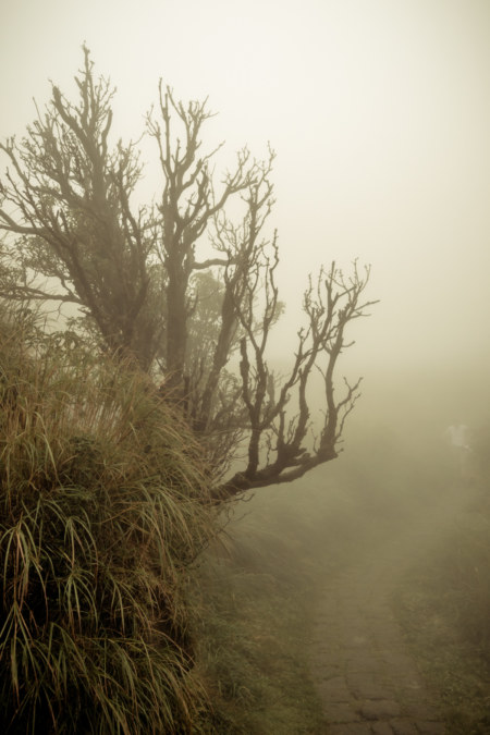 A ghostly tree in the endless ocean of fog on Yangmingshan