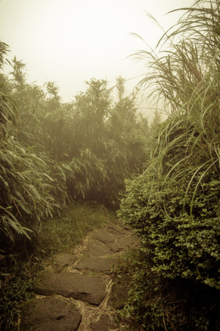 The protection of the long grass on Yangmingshan