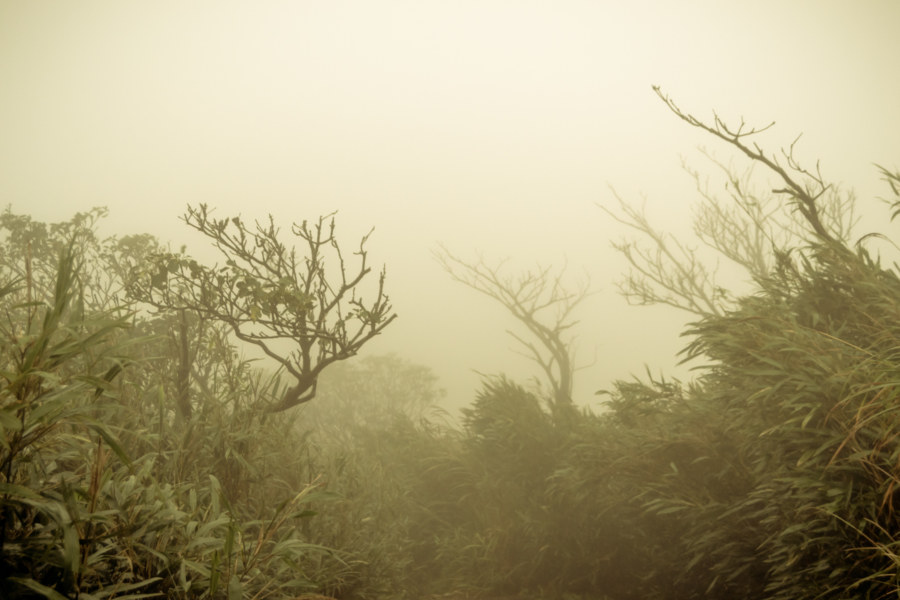 Ghostly trees in the endless fog on Yangmingshan