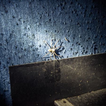 Big spider inside Dadong Theater