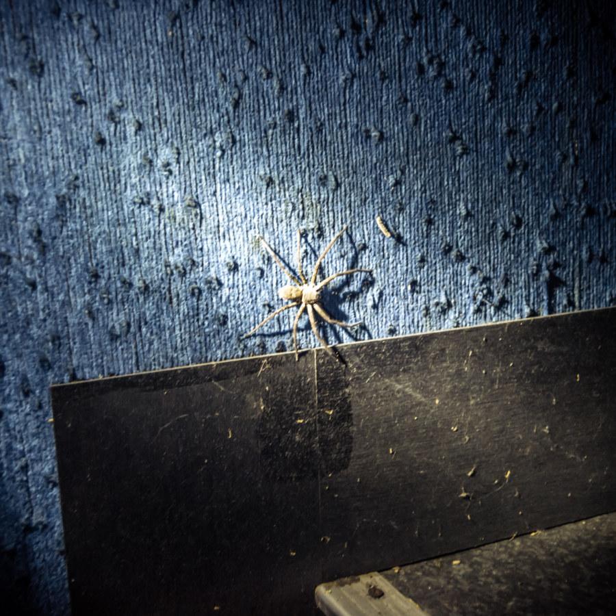 Big spider inside Dadong Theater