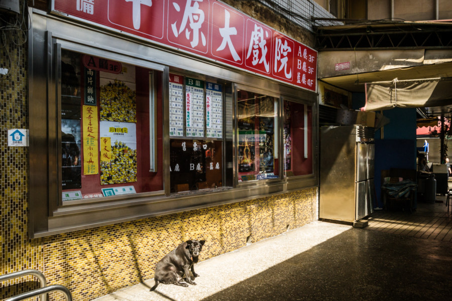 Old dog outside a vintage theater in Zhongli
