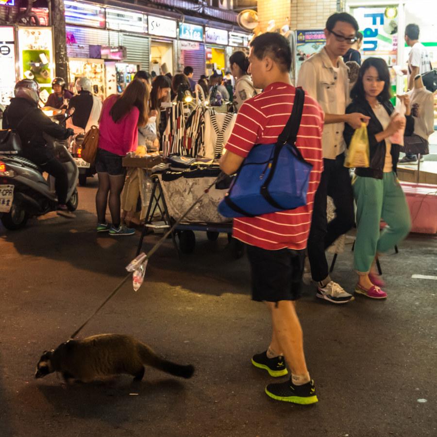 Pet civet at Zhongyuan Night Market