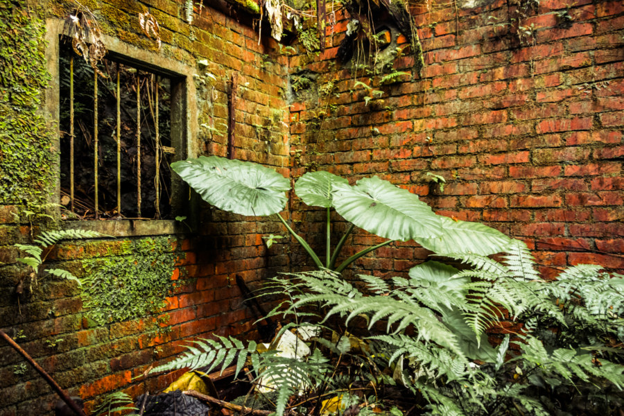 Nature reclaims an abandoned home in Jingtong