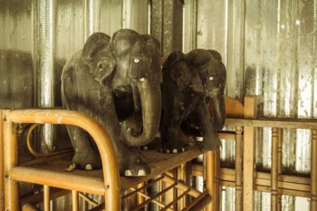 Elephant sentinels