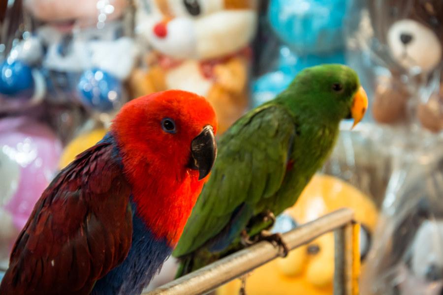 Night market birds