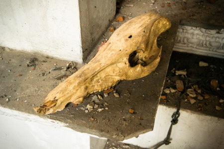 A skull inside the White Lion House