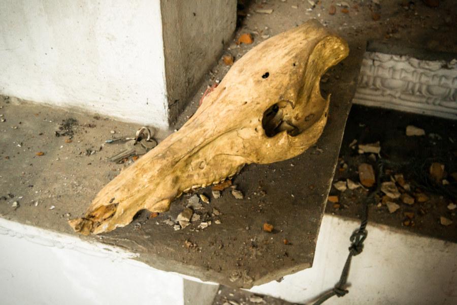A skull inside the White Lion House